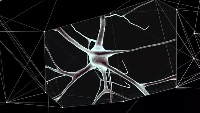 Pierwszy ultra-wysokiej rozdzielczości model mózgu-1