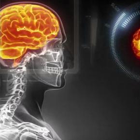 Pierwszy model mózgu o tak dużej rozdzielczości