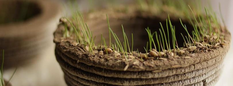 Małe dzieła sztuki z trawy w domu i ogrodzie1