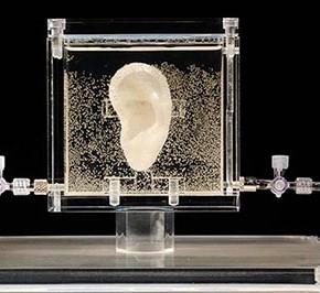 Słynne ucho Van Gogha - zostało wydrukowane z jego autentycznym DNA