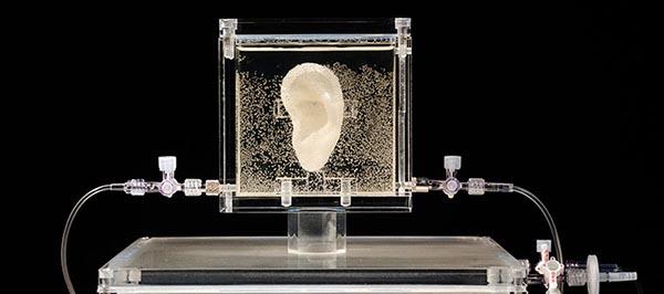 Słynne ucho Van Gogha – zostało wydrukowane z jego autentycznym DNA