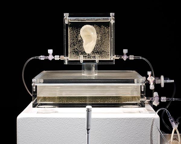 Słynne ucho Van Gogha - zostało wydrukowane z jego autentycznym DNA2