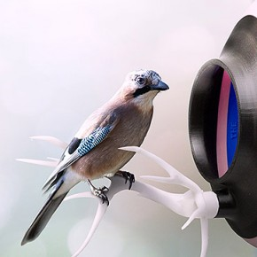 Wydrukuj swój karmnik dla ptaków