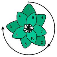 Struktury Fibonacciego wydrukowane na drukarke 3D2